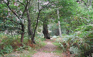 Walk and Talk therapy. Sherwood forest